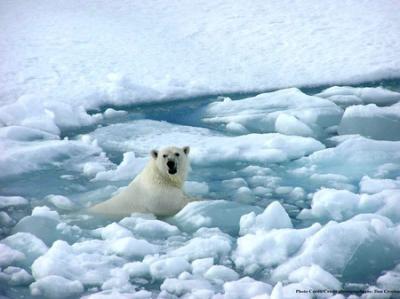 27 ans de fonte des glaces dans l'Arctique en vidéo