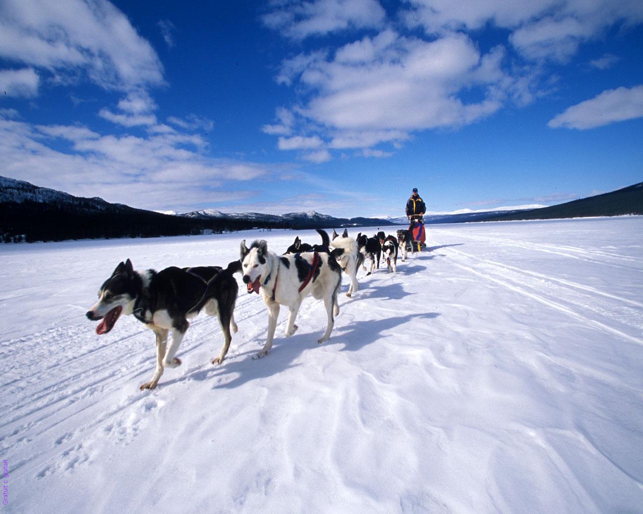 alaska-le-grand-nord-en-traineau
