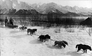 traineau à chien au yukon