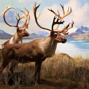 Partie de chasse en sologne 1979 - 2 part 1