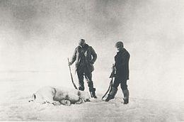 photo d'un ours polaire tué par l'expédition Andrée